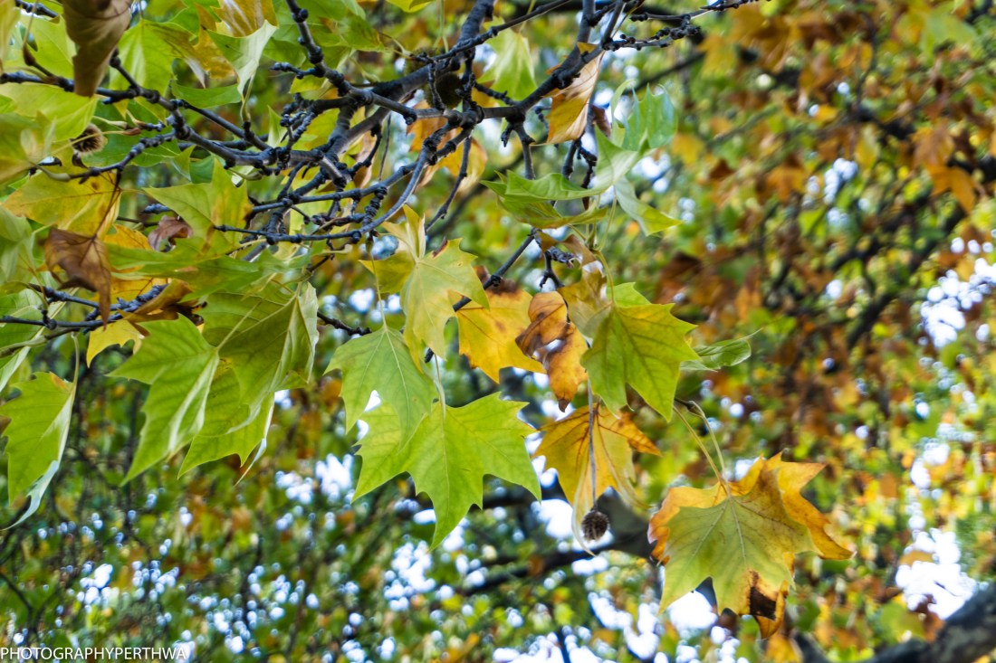 turning leaves (1 of 1).jpg