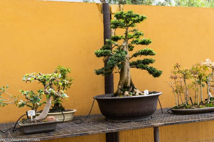 Japanese Garden 14 (1 of 1).jpg