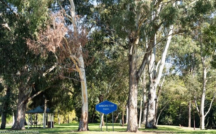 arboretum3 (1 of 1).jpg