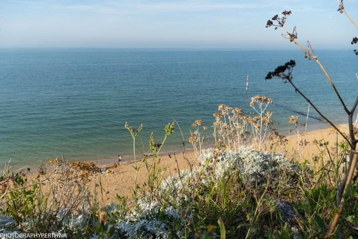 flowers and sea (1 of 1).jpg