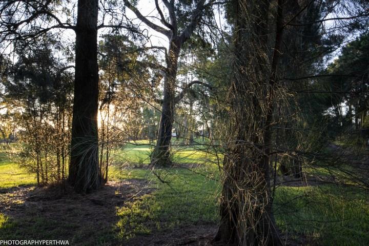 sun through trees (1 of 1)-2