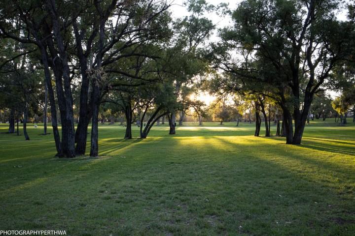 sun through trees (1 of 1)-3