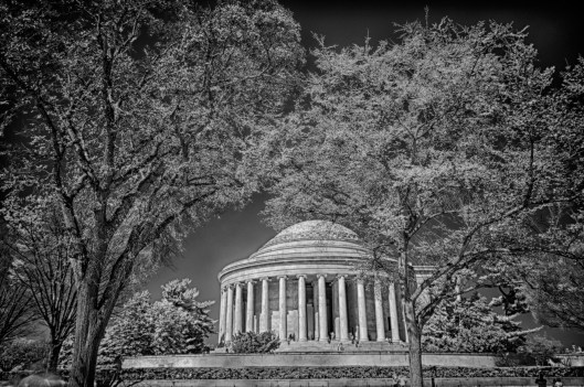 Cherry Blossoms IR Jefferson Memorial