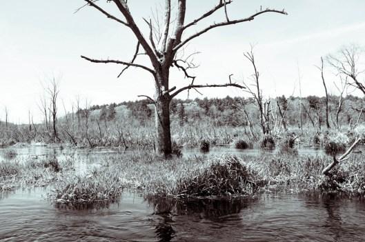 ipswich-rivertree