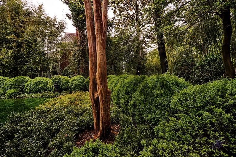 Georgetown_Garden_Plank_01
