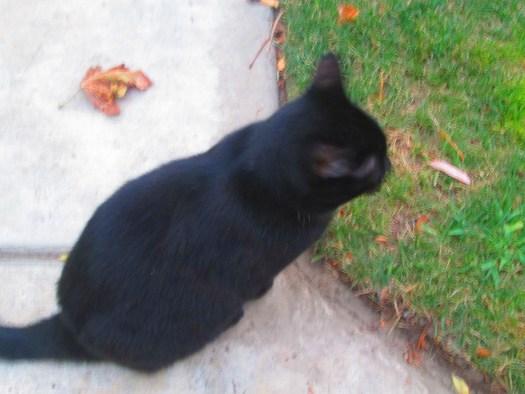 Irina The Cat