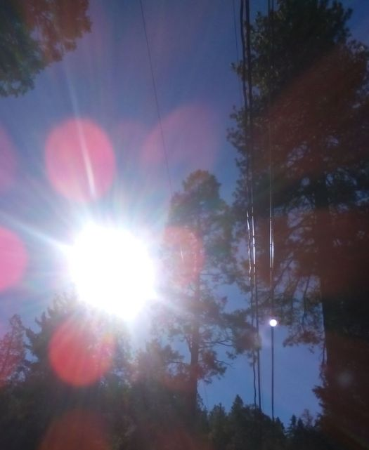 Sun Shimmering