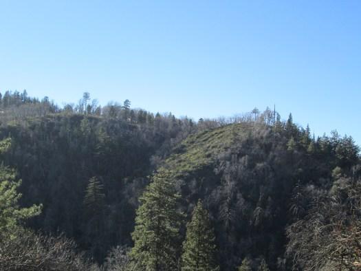 Trees on a hillside in the San Bernardino Mountains.