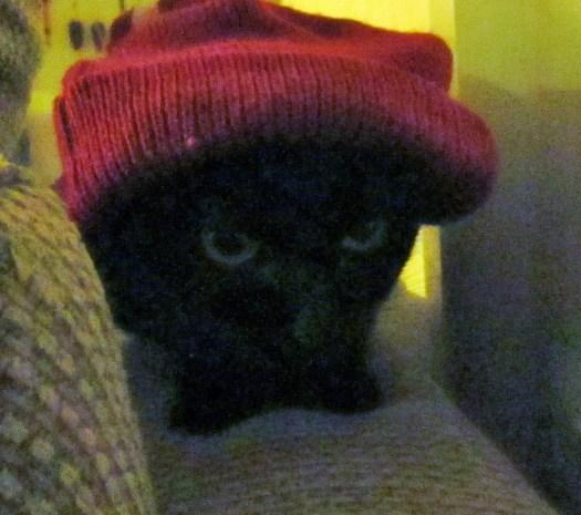 Here Irina the cat is wearing a beanie.