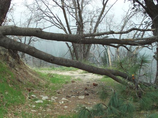 Here is a fallen tree I cam across during a hike up in the San Bernardino Mountains.