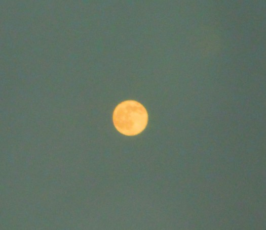 Another photograph of the orangey moon.
