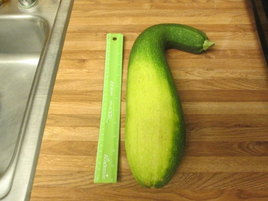 The zucchini is longer than twelve inches.