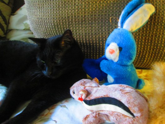 Irina the cat is surrounded by a stuffed rabbit and squirrel.