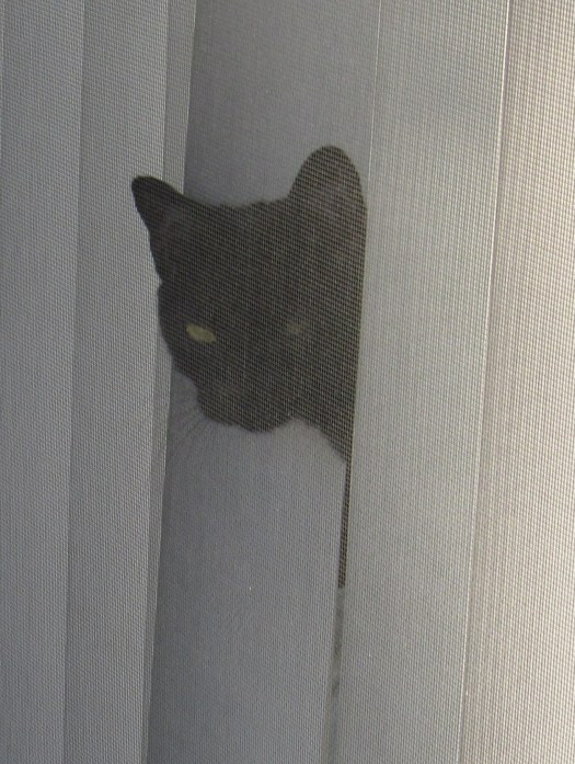 Irina the cat is peeking out at me.