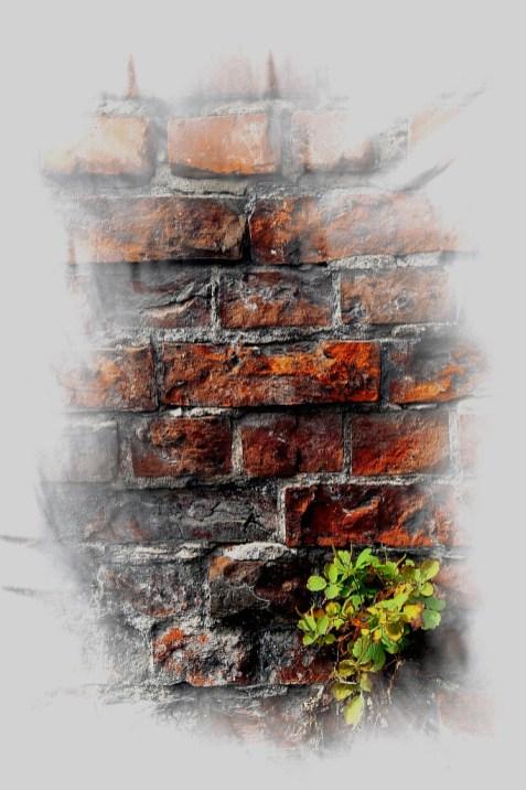 фото для интерьера, росток на стене