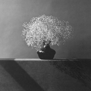 Фотографии Роберта Мэпплпорта