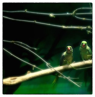 Птицы со смыслом в интерьерах и декоре