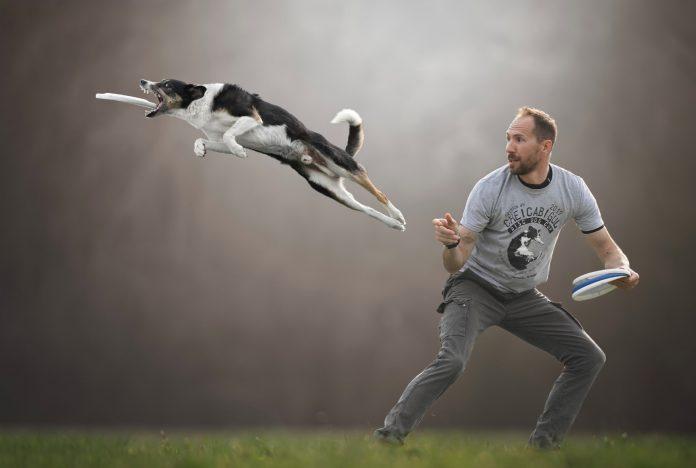 Клаудио Пикколи. Летающие собаки. 2019