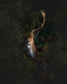 Фотография природы в оформлении интерьеров