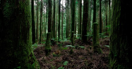 Green woods (Azores 2011)