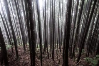 Misty Forrest (