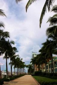 Palm trees!