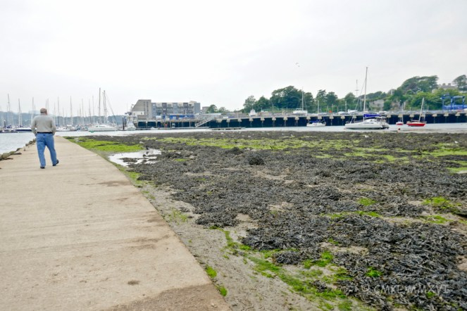 Tidal flow isn't always pretty, but low tide is a terrific playing field for seabirds. While ...