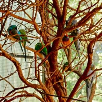 Parrots galore