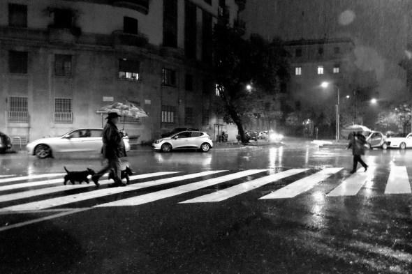 elisa villa cani a milano 011