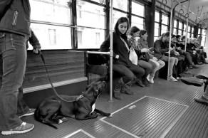 elisa villa cani a milano 03