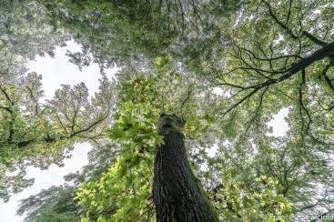 alberi giardini di porta venezia