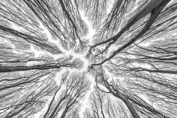 alberi parco forlanini