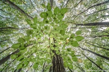 alberi parco lambro