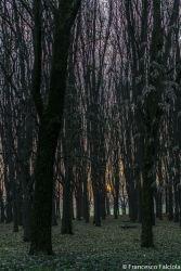 bosco parco forlanini