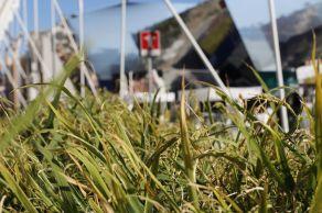 corrado formenti 6 il riso cluster riso