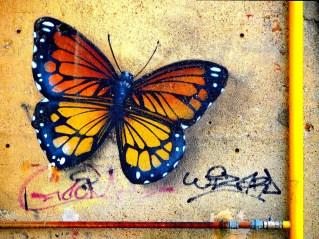Stefania Oppedisano 003 Farfalla da un muro