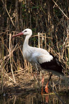 uccello acquatico 002