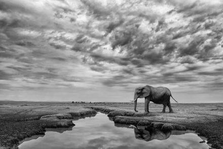 Mario Moreno, Giant Serenity, 2018, Masai Mara National Reserve (Kenya)