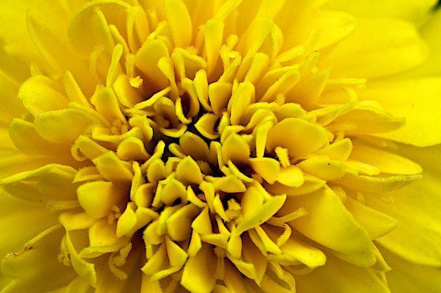 Marigold at f/22