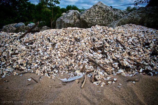 Erie Shells photomiser-com 011