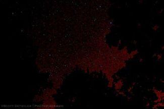 Stars and Fireflies