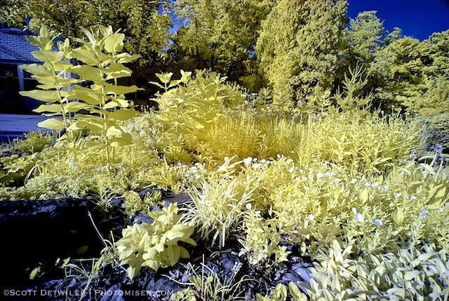 Garden IR Ultrawide