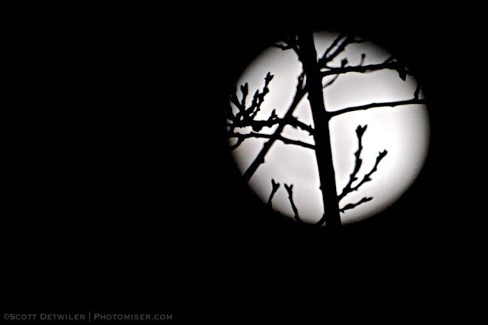 Twigs silhouetted by full moon
