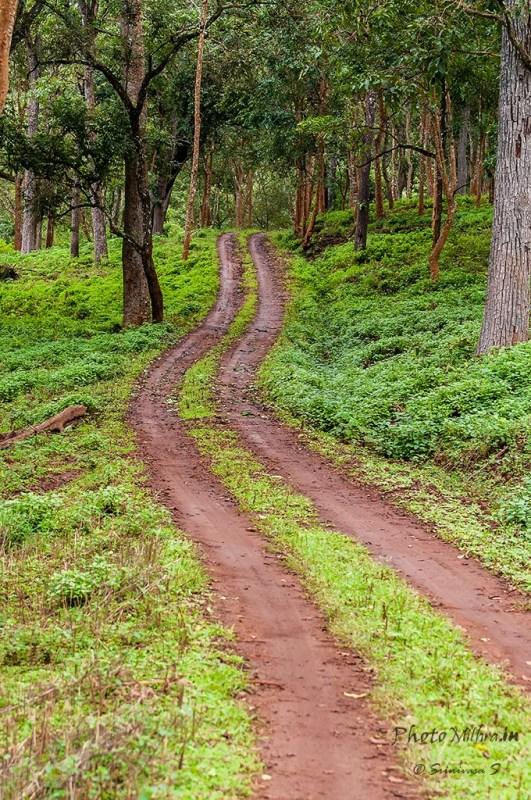 Serpentine jungle road