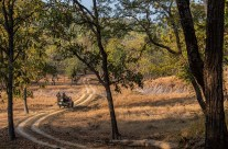 Satpura national park, MP – A visit to Forsyth Lodge