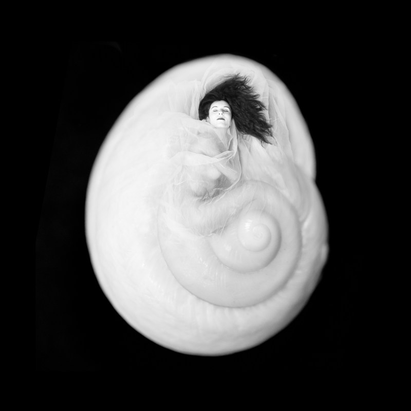 model metamorphoses into a nautilus shell
