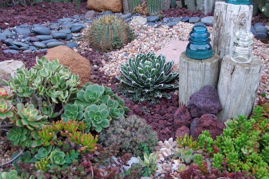 Cactus Rock Garden Photos