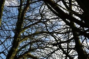 orleans_gardens_32_1500