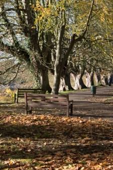twickenham_riverside_16-11-19_20_1500