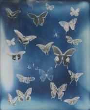 adam_fuss_butterfly_04